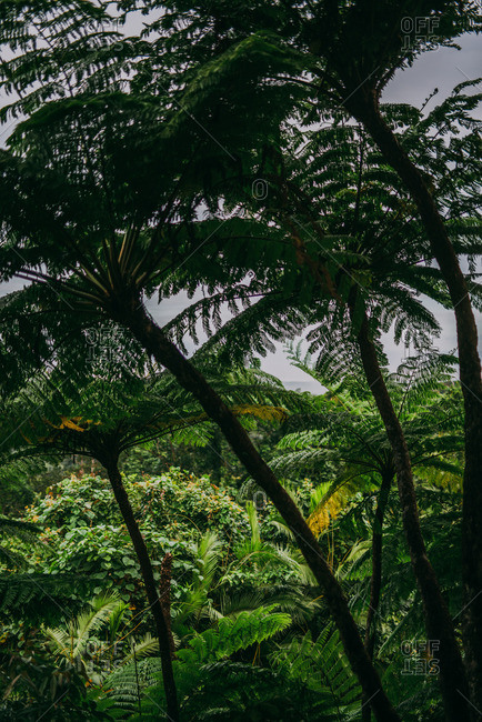 Foliage and trees within the Daintree Rainforest, Australia