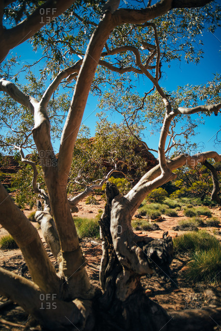 Scenic landscape along the trail at Kings Canyon, Australia