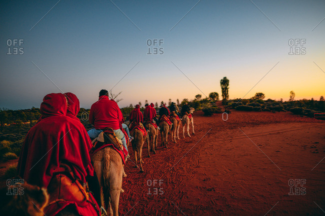 A morning camel ride through Australlia