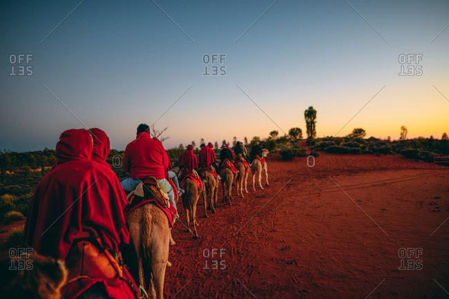 A morning camel ride through Australlia