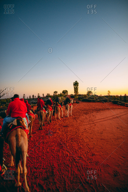 A group taking a morning camel ride at sunrise in Australia