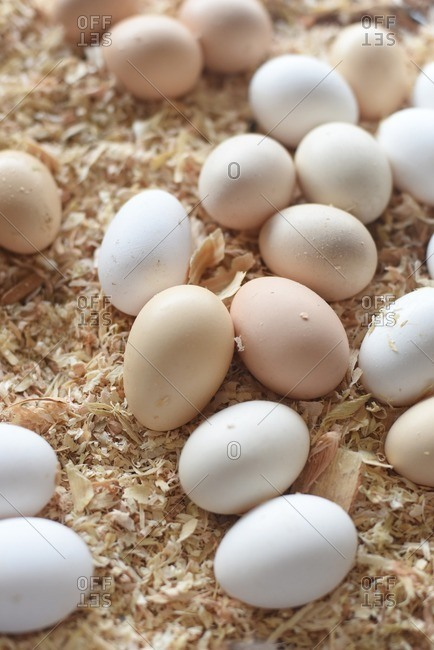 Eggs on a bed of sawdust