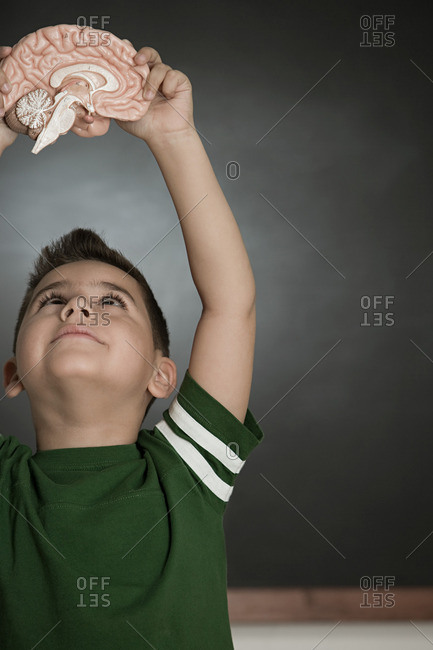 Boy holding a model brain