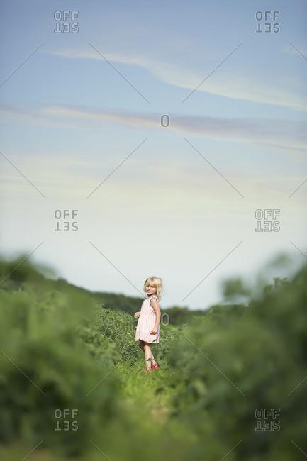 Girl wandering a summer field