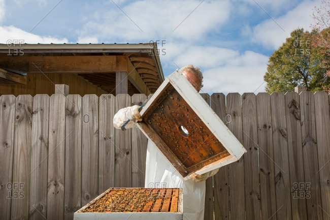 Man removing lid from beehive