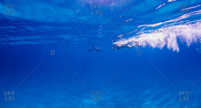 Diver following Atlantic Spotted Dolphins over seabed