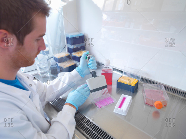 Scientist using multi well pipette to fill multi well plate in biological safety cabinet in laboratory, Jenner Institute, Oxford University