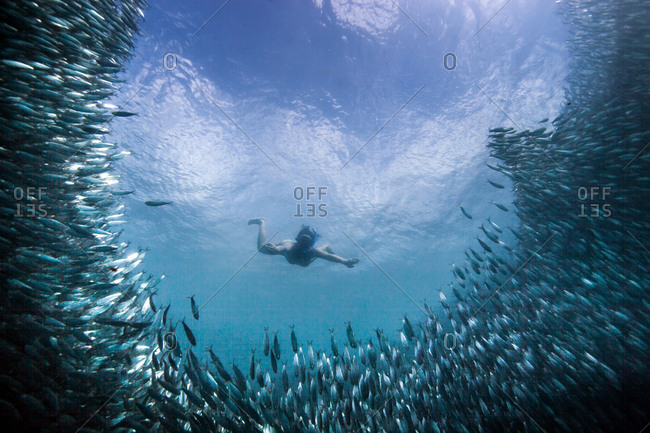 Young woman swimming with school of sardines, Moalboal, Cebu, Philippines