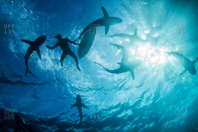 Low angle underwater view of surfer with surfboard with sharks, Colima, Mexico
