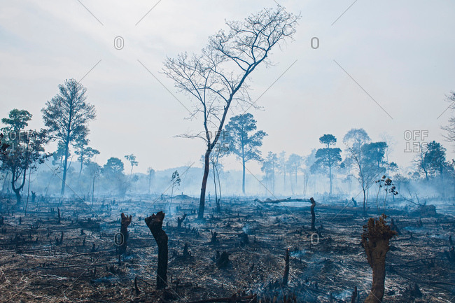 Deforestation on misty landscape, Thakhek, Khammouane, Laos