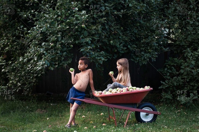 Two children with a wheelbarrow full of apples on a summer day