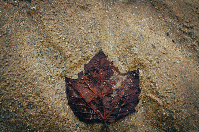 Fallen leaf on wet ground