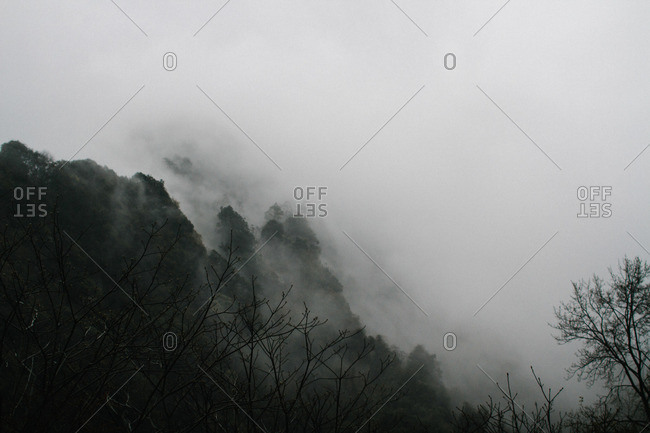 Dense fog in wooded setting