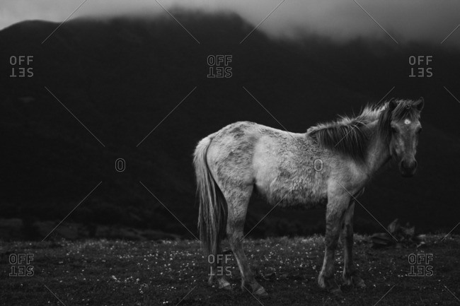Still horse in rural setting