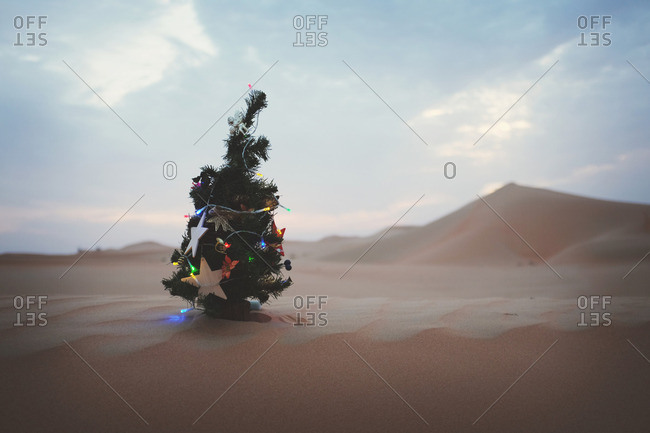Christmas Tree In The Desert.A Christmas Tree In Desert In Uae Stock Photo Offset