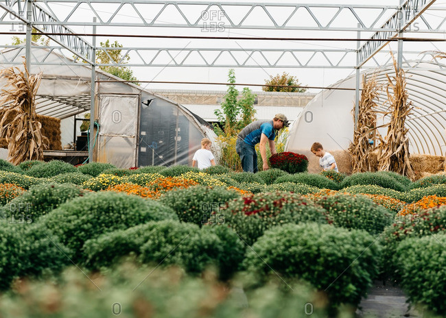 Father and boys shop for fall plants at garden center