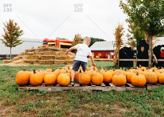 Boy selecting a pumpkin at farm