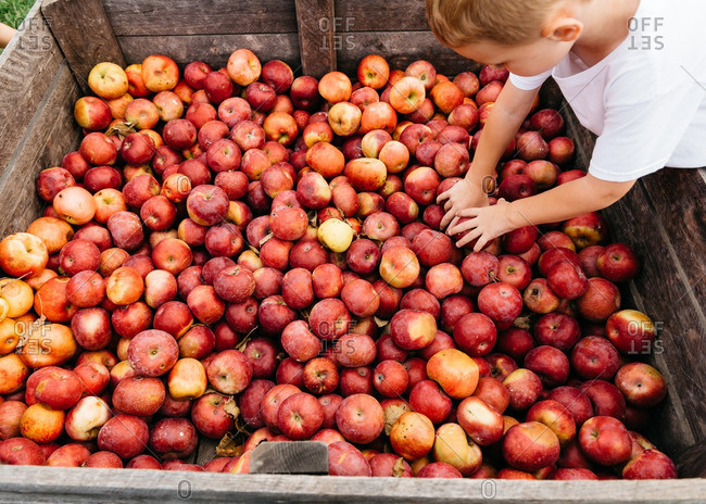 Boy getting apples from a farm stand bin