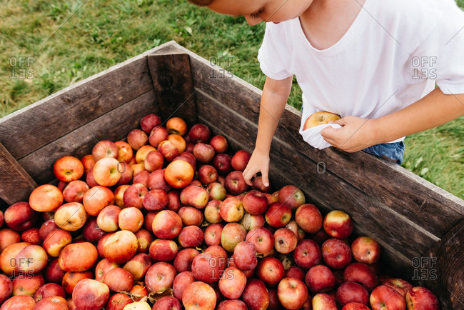 Boy picking apples from a farm market bin