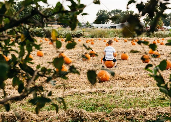 Boy sitting on pumpkin in field