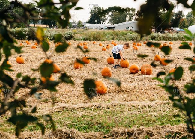 Young boy picking pumpkins in pumpkin patch
