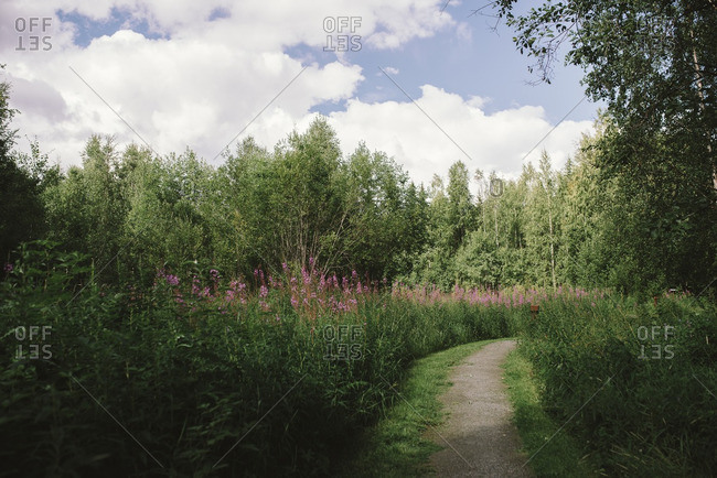 Path winding through a meadow of tall flowers in a forest
