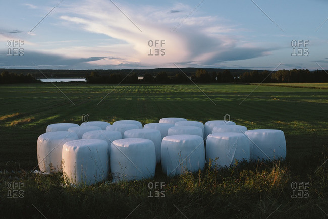 Round bales covered in plastic on the edge of an agricultural field