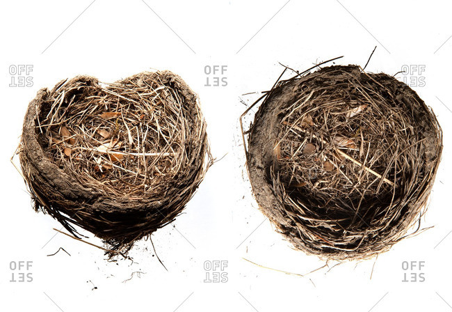 Two bird's nests on a white background