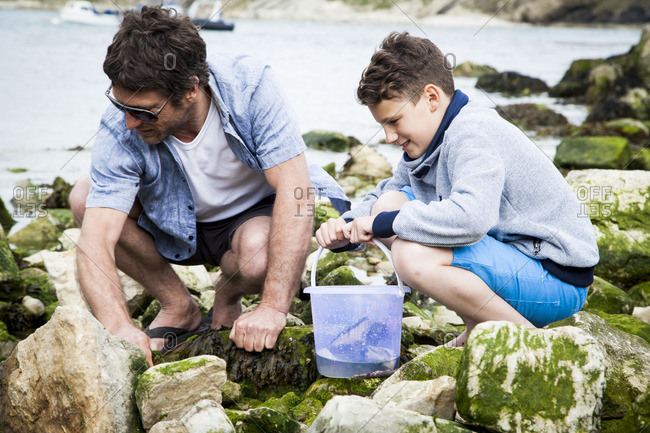 Father and son exploring sea life between rocks on beach
