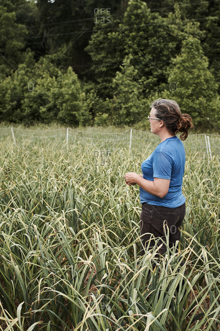 Woman standing in a field with garlic scapes