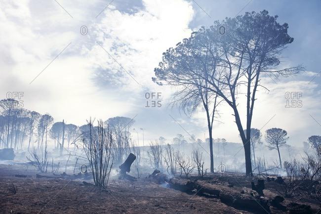 South Africa, Stellenbosch, devastated land after a bushfire