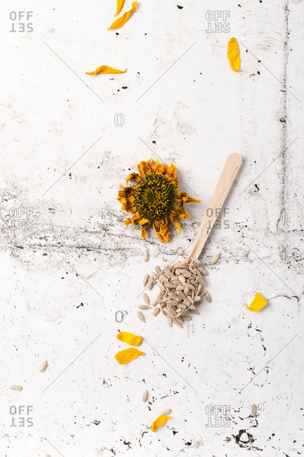 Dried sunflower and sunflower seeds on wooden spoon