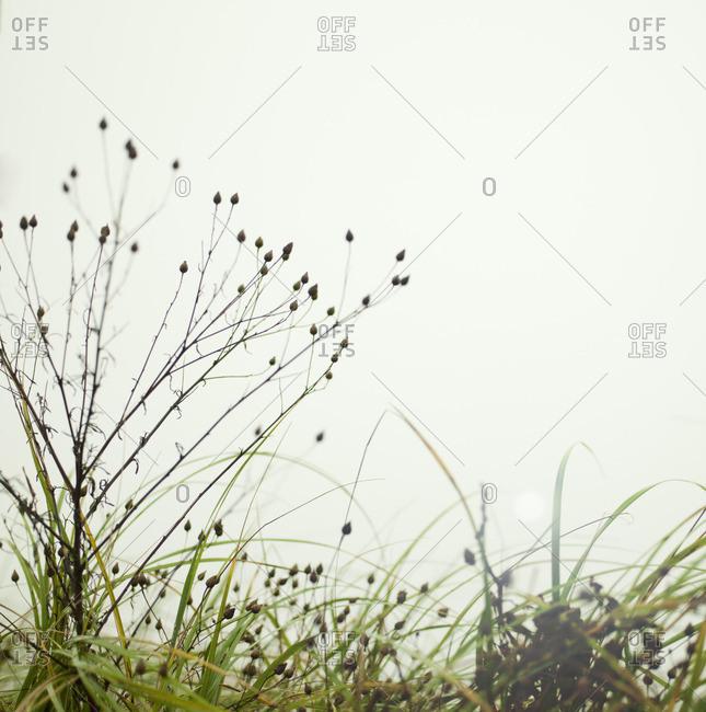 Tall grass and sun flare