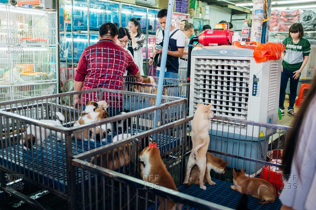 Guangzhou, China -  October 1, 2016: Puppies for sale at a pet store
