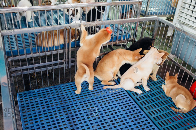 Puppies for sale at a pet store in China