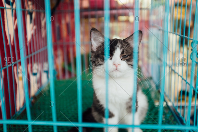 Kitten in a cage at a pet store in China
