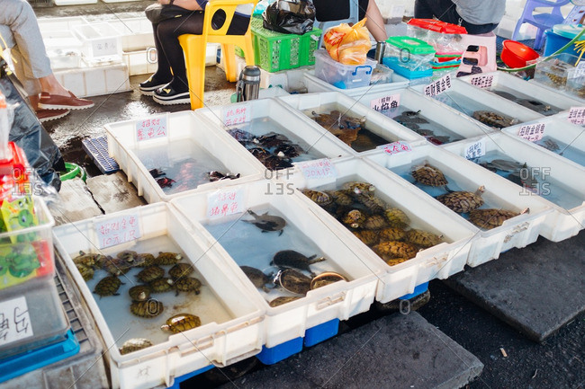 Guangzhou, China -  October 1, 2016: Turtles for sale at a pet store