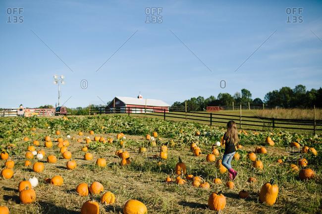 Little girl walking through a pumpkin patch