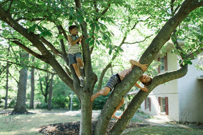 Two brothers climbing in a tree in their front yard