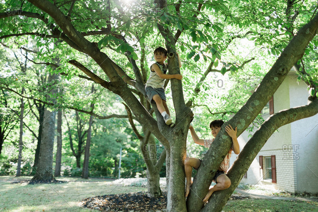 Brothers climbing on a tree in their front yard