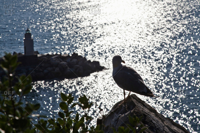 Seagull perched on coastline rock