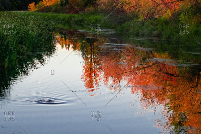 Ripple in surface of water reflecting colorful autumn leaves