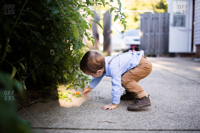Toddler reaching for tomato on ground
