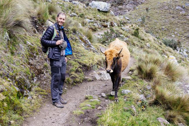 Peru Cordillera Blanca Huaraz Huascaran National Park hiker on a mountain path with a cow