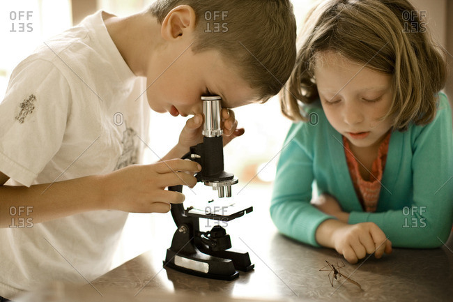 Young boy and girl examining insects with a microscope.