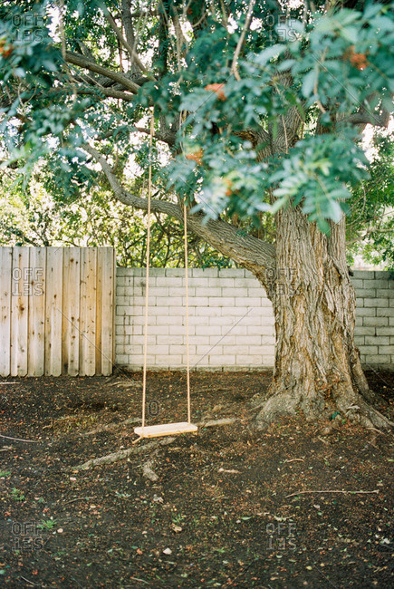 Wooden swing hanging from a tree