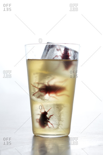 Bugs frozen in ice cubes in a beverage