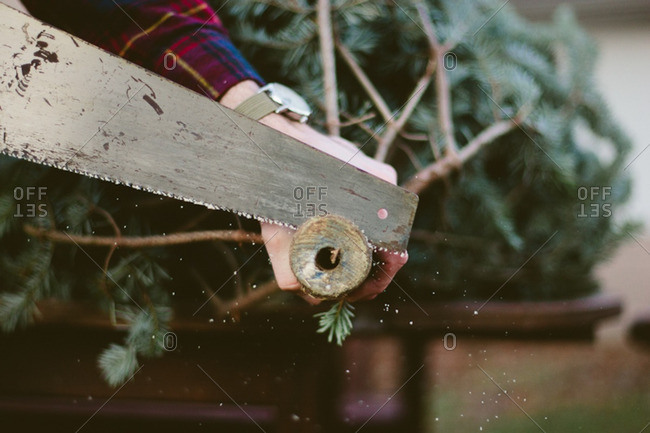 A man sawing off the end of a Christmas tree trunk with sawdust falling