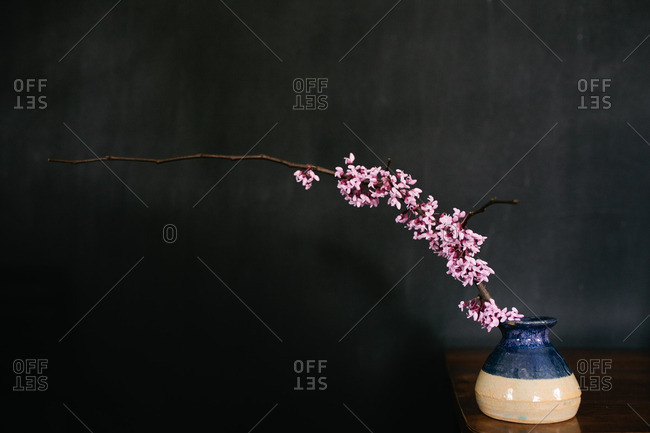 Cherry blossom branch in a blue and white vase