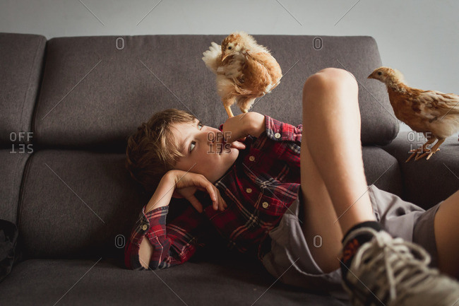 Boy and baby chickens on a couch